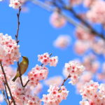 2018年4月発売のSwitch注目タイトル紹介